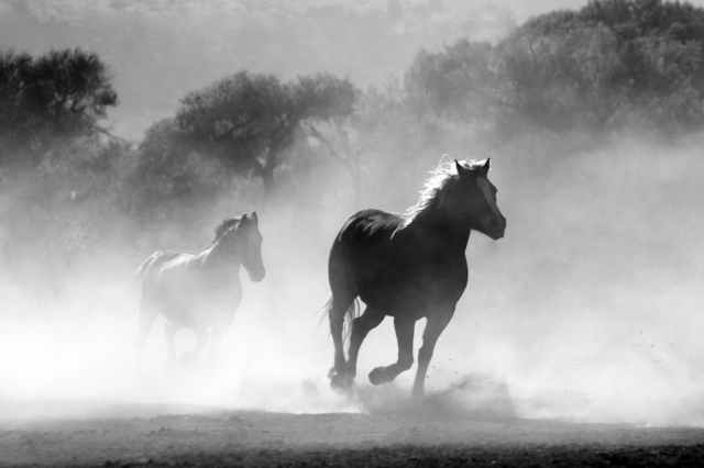 horse-herd-fog-nature-52500.jpeg